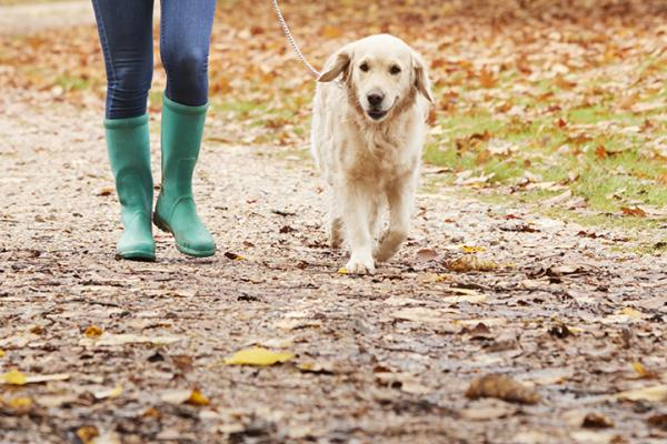 American Diabetes Month: How Your Dog Can Be Your Workout Buddy